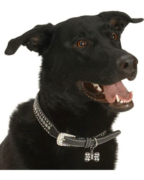Blazin Roxx Studs & Stones Dog Collar - S-XL, Black, hi-res